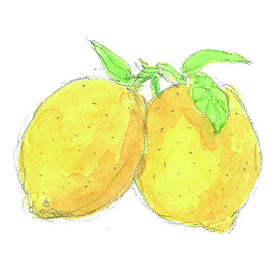 レモン手描き